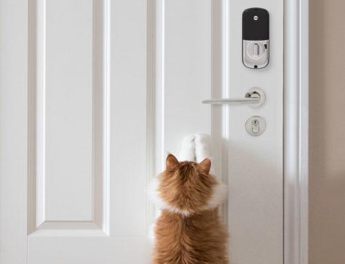 Mais segurança para o seu pet: evitando fugas!